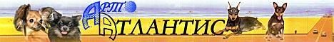 Арт-Атлантис - питомник цвергпинчеров, русских той терьеров и чихуахуа